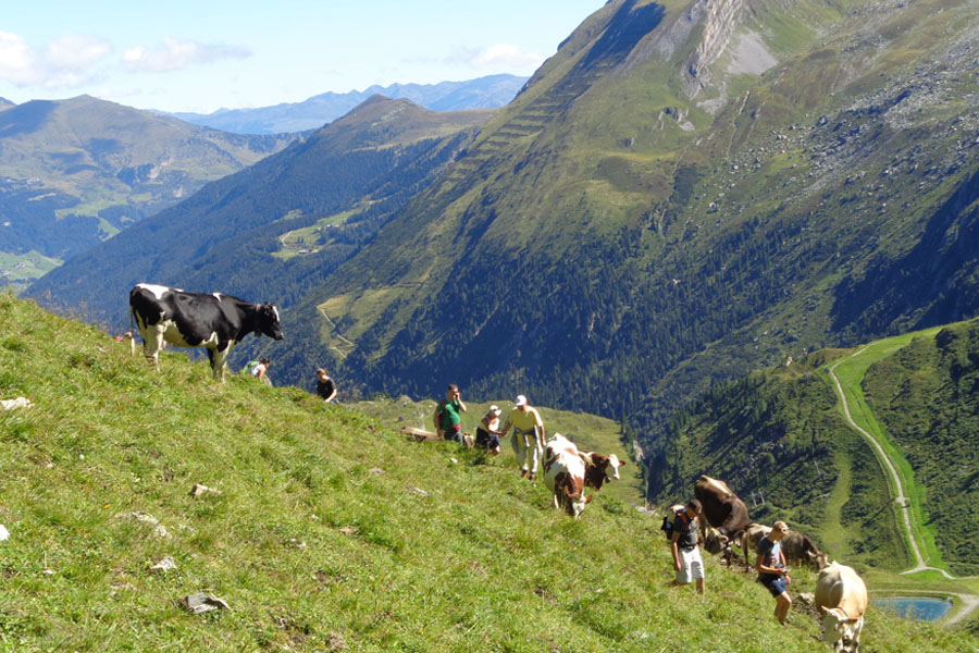 wandern-zillertal-hotel-alpenhof